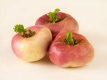 Turnip Stock Image