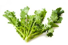 Turnip tops Royalty Free Stock Photo