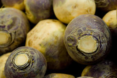 Turnips. Stack of turnips, ready to be cut and cooked Stock Images