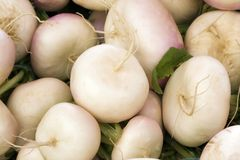 Turnips Royalty Free Stock Photography