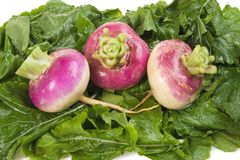 Turnips on a Bed of Greens. Three turnips on a bed of their greens Stock Photos