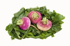 Turnips on a Bed of Greens. Three turnips on a bed of their greens Stock Photo