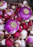Turnips and Radishes Stock Images