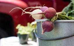 Turnips for sale at a farmers market Stock Image