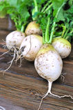 Turnips on the table Stock Image