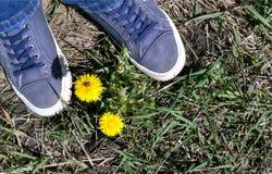 Turnschuhe auf einem Gras in der Nähe ein Löwenzahn Lizenzfreie Stockfotos
