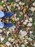 Turnschuhe auf Herbstlaub stockfoto