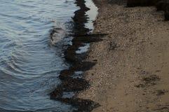 Turnstones στη στάθμη παλίρροιας Στοκ Εικόνες
