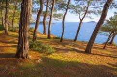 Turquía, árboles de pino y el mar Foto de archivo