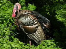 Turquía 1 foto de archivo