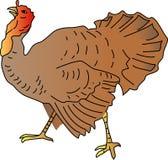 Turquía libre illustration
