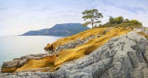 Turquía, Oludeniz, mar, y pino de orilla Fotos de archivo