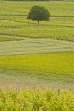 Turquant vineyards Stock Photo
