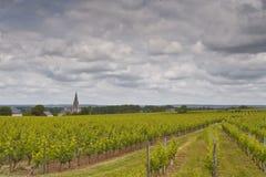 Turquant vineyards Royalty Free Stock Image