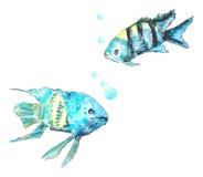 Turquesa de los pescados Imágenes de archivo libres de regalías