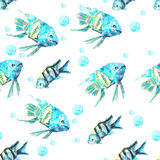 Turquesa de los pescados del modelo Fotografía de archivo