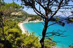 Turquesa egea del verano griego y motivo verde de la conífera del pino de la naturaleza Imagen de archivo
