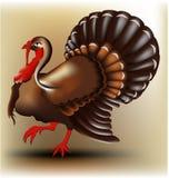 Turquia Fotografia de Stock Royalty Free