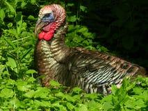 Turquia 2 Fotos de Stock Royalty Free
