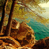 Turquoise Adriatic Sea and pine tree,Croatia Royalty Free Stock Photos