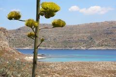 Turquoise beach at Imeri Gramvousa Bay. Crete. Greece Royalty Free Stock Photos