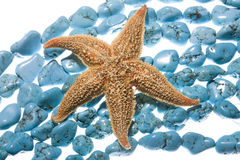 Turquoise beads & sea star royalty free stock photo