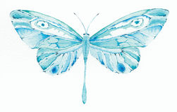 Turquoise and blue fantasy but. Watercolor painting of a turquoise and blue fantasy butterfly Royalty Free Stock Images