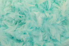 Turquoise blue feathers from a boa. In a full frame image royalty free stock images