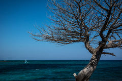 Turquoise blue water and defoliate tree in Sardinia, Italy Royalty Free Stock Images