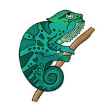 Turquoise chameleon on branch. White background, illustration in hand drawn style Stock Images