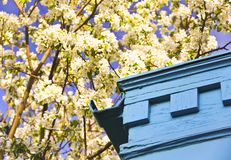 Turquoise Corner & Blossoms Royalty Free Stock Photography