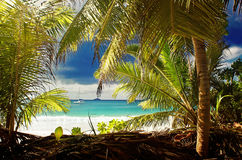 Turquoise dream. Wiev netween the palm trees at praslin island at seychelles Stock Images
