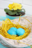 Turquoise eggs Royalty Free Stock Image