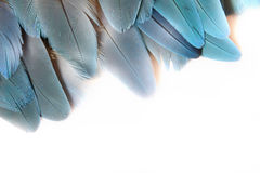 Turquoise feathers Stock Photo