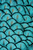 Turquoise Feathers. Macro photo of blue/turquoise bird feathers Royalty Free Stock Photography