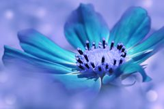 Turquoise flower daisy on a blue blurred background. Closeup. Soft focus. Nature royalty free stock photography