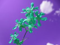 Turquoise flower of a new life. Grows overcoming the consequences royalty free stock photography