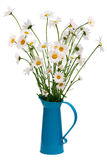 Turquoise jug with oxeye daisies Royalty Free Stock Photo