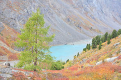 Turquoise Lake – autumnal colors in Altai Mountain Royalty Free Stock Photos