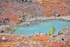 Turquoise Lake – Autumnal Colors In Altai Mountain Royalty Free Stock Photo