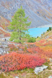 Turquoise Lake – Autumnal Colors In Altai Mountain Stock Photo
