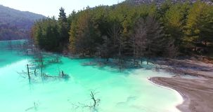 Turquoise Lake and Pine Trees in the Lake stock video footage