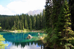 Turquoise Lake water in pines wood. Carezza lake and Sella mountain group, green pines forest. Trentino Alto Adige, Italy royalty free stock photography