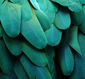 Turquoise Macaw Feathers. Macro photo of blue/turquoise macaw feathers Royalty Free Stock Photography
