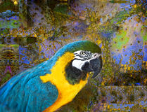 Turquoise Macaw Royalty Free Stock Photography