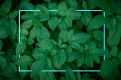 Free Turquoise Neon Light Lines In The Dark Green Leaves. Stock Image - 165270331