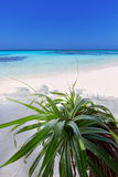 Turquoise  paradise. Beautiful tropical day on the island beach at Maldives Royalty Free Stock Photos