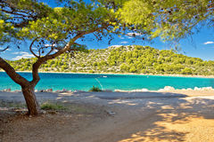 Turquoise pine tree beach of Croatia Stock Photography
