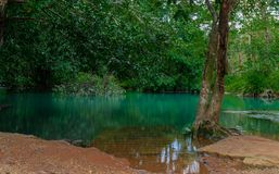 Turquoise pond in rainforest royalty free stock photography