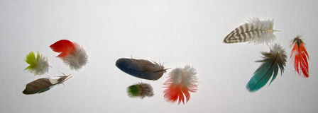 Turquoise Red Green Blue and Brown Feathers on White Linen Background Stock Images